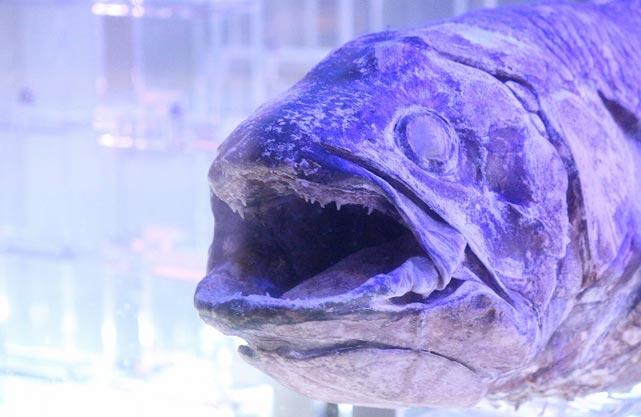 沼津港深海水族館 シーラカンス・ミュージアム