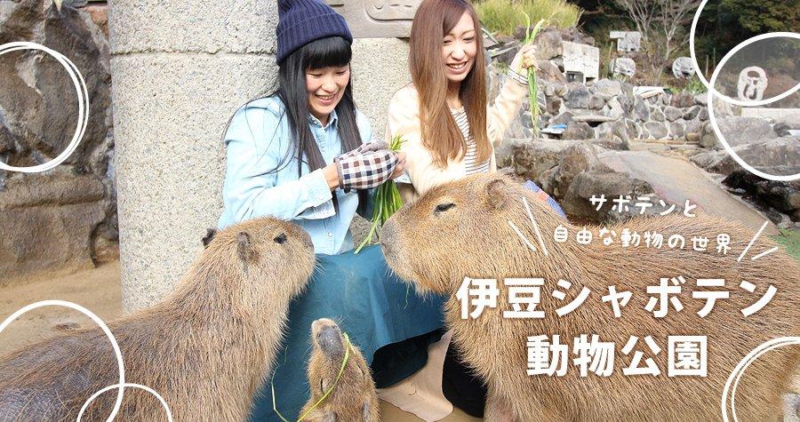 伊豆とは思えない世界感溢れる1500種ものサボテンと多肉植物、自由にのんびり暮らす動物の世界! 「伊豆シャボテン動物公園」