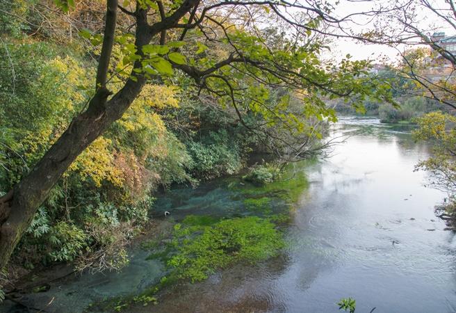 柿田川公園 ~柿田川湧水群~