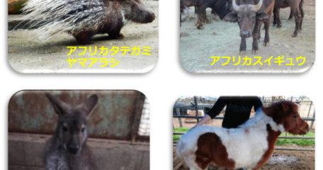 新たに動物が仲間入り~♪ 4種類の動物が増えます♪