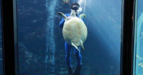 ウミガメの引越し