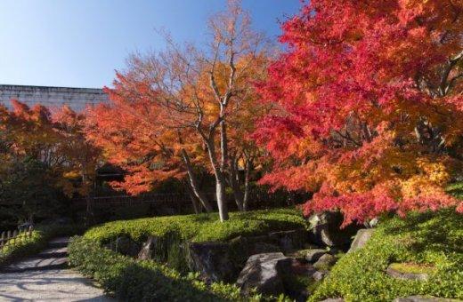 【MOA美術館】茶の庭 紅葉2019