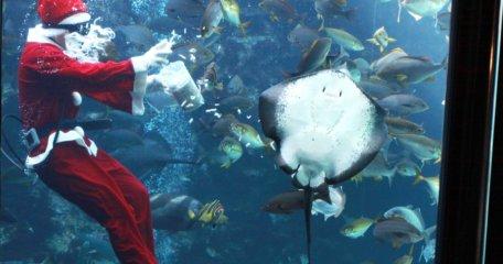 サンタクロースによる魚の餌付けショー