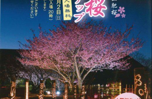 真冬に咲く土肥桜『土肥桜ライトアップ』